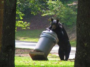 black bear in the garbage