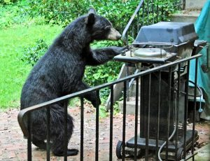 bear at the bbq grill