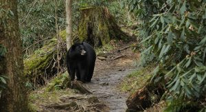 bear encounters - bearwise