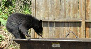 be bearwise - bear on top of garbage