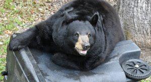 secure trash - bearwise