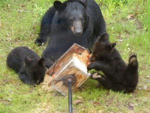 Bear family raiding bird feeder