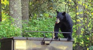 bear on dumpster - communities