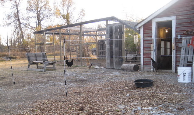 Electric-fenced chicken pen