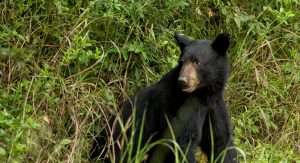 bear safety while hunting - bearwise