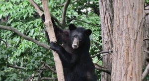 remove bird feeders - bearwise