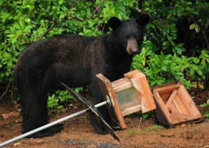 bear raiding a bird feeder