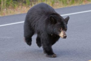 bear on the road - bearwise