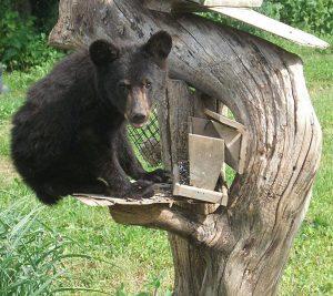 bear on bird feeder post