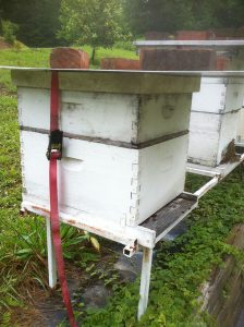 tied-down beehives