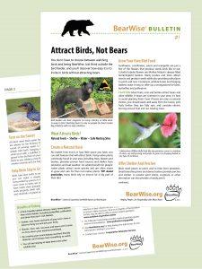 BearWise Bulletin #1