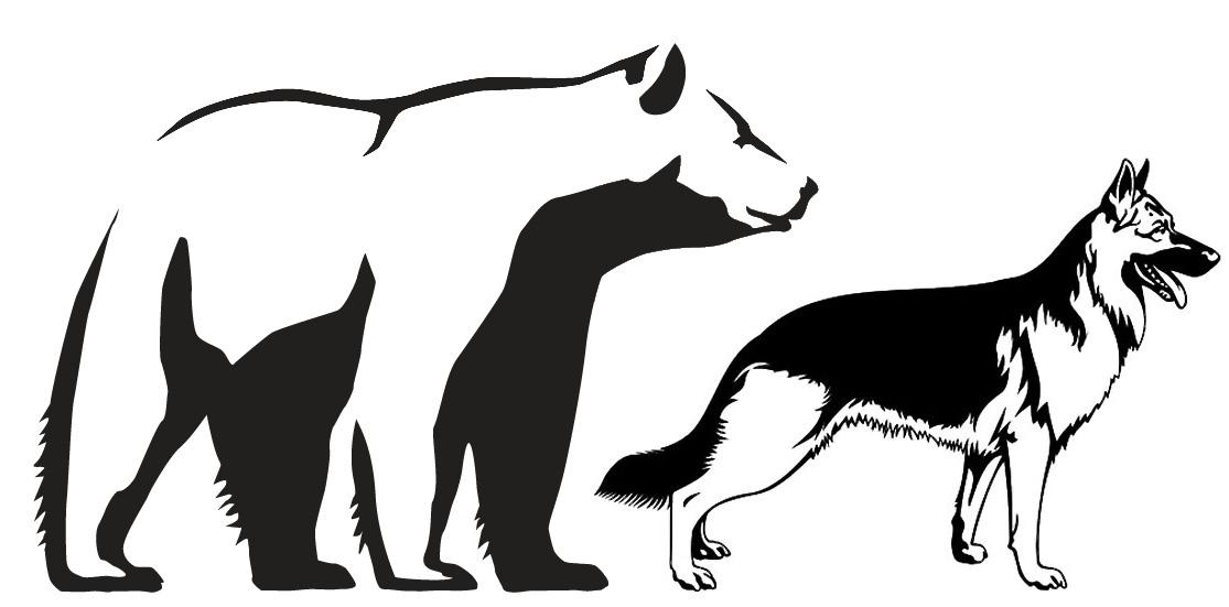dog-bear-comparison
